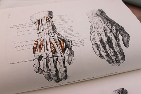 How To Draw Lifelike Hands In 4 Steps Hands Pinterest Hand