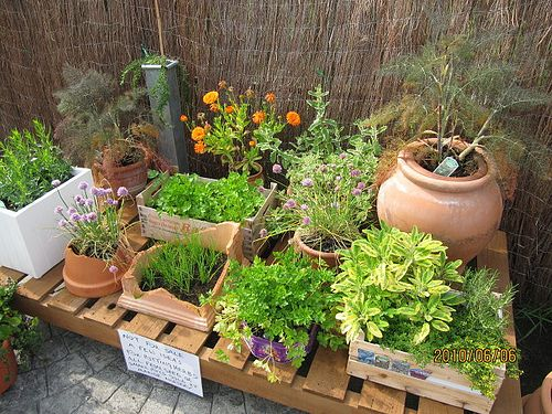 Top 25 Most Common Substitutes When Using Herbs And Spices. Container Herb  GardenHerbs ...