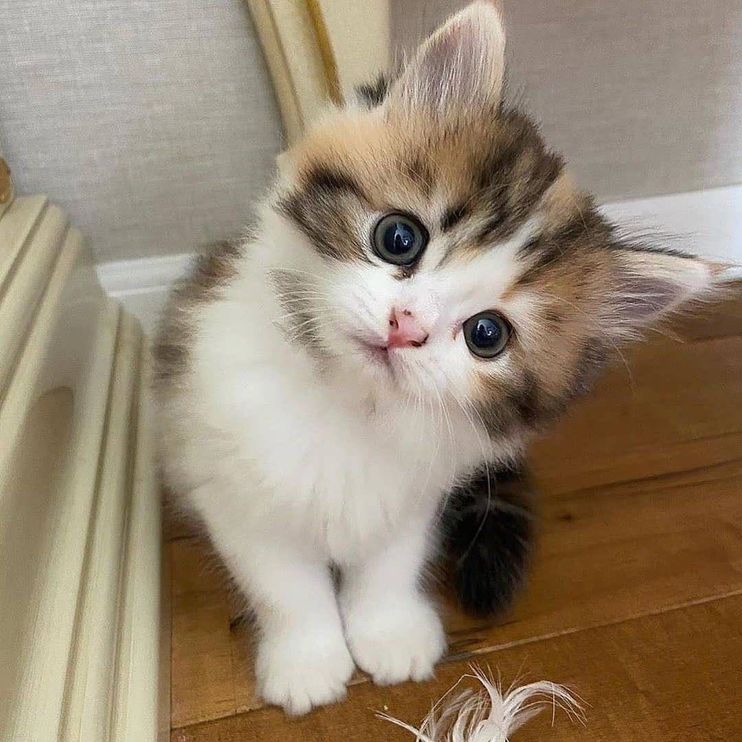 Pin By Gift Card On Cat In 2020 Cute Animals Cute Baby Animals Cats And Kittens