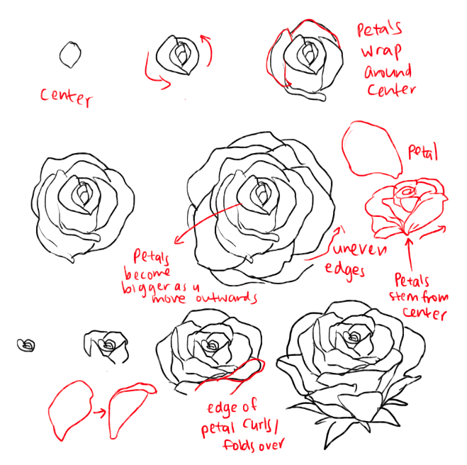 kelpls THERE ARE DIFFERENT KINDS OF PEONIES idk which one