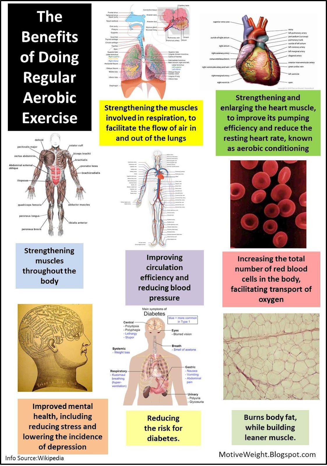 Regular Exercise Benefits: *Strengthens respiration ...