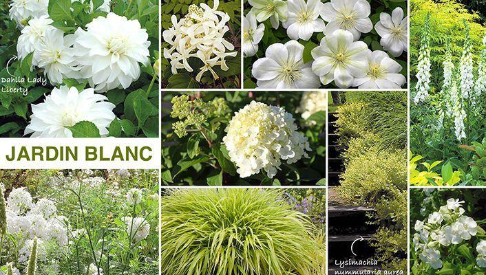 Promesse de fleurs plantes pinterest for Promesse de fleurs