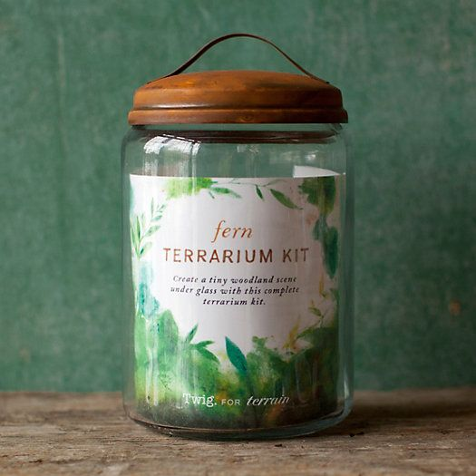 Fern Terrarium Kit Gift Ideas Pinterest Terrarium Garden And