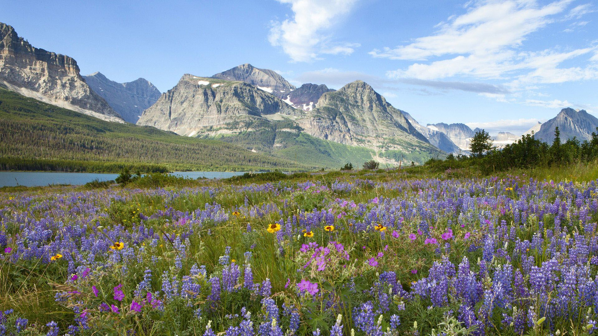 Glacier National Park Wildflowers 1920x1080 Hd Wallpaper