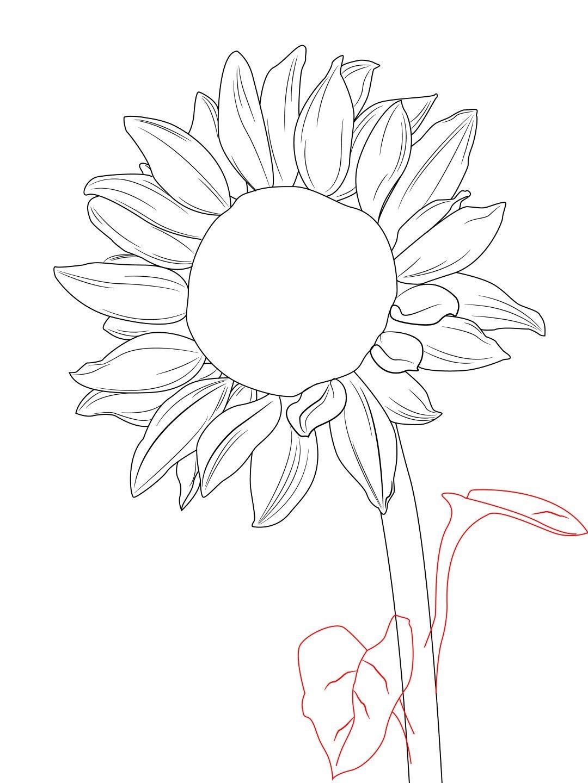 How To Draw A Sunflower | Pinterest | Blumen zeichnen, Sonnenblumen ...