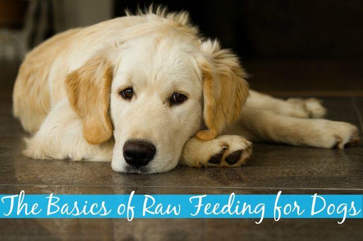 Raw Dog Food Diet The Basics Raw Feeding For Dogs Dogs Dog