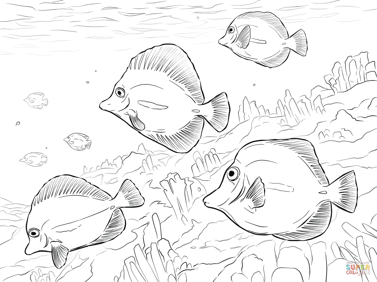 tropical fish coloring pages free printable pictures - Tropical Coloring Pages Printable