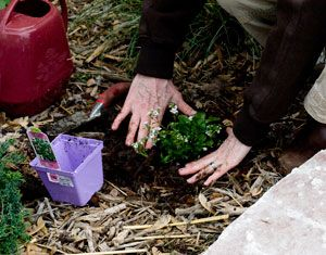 How to plant bedding plants in 5 easy steps.
