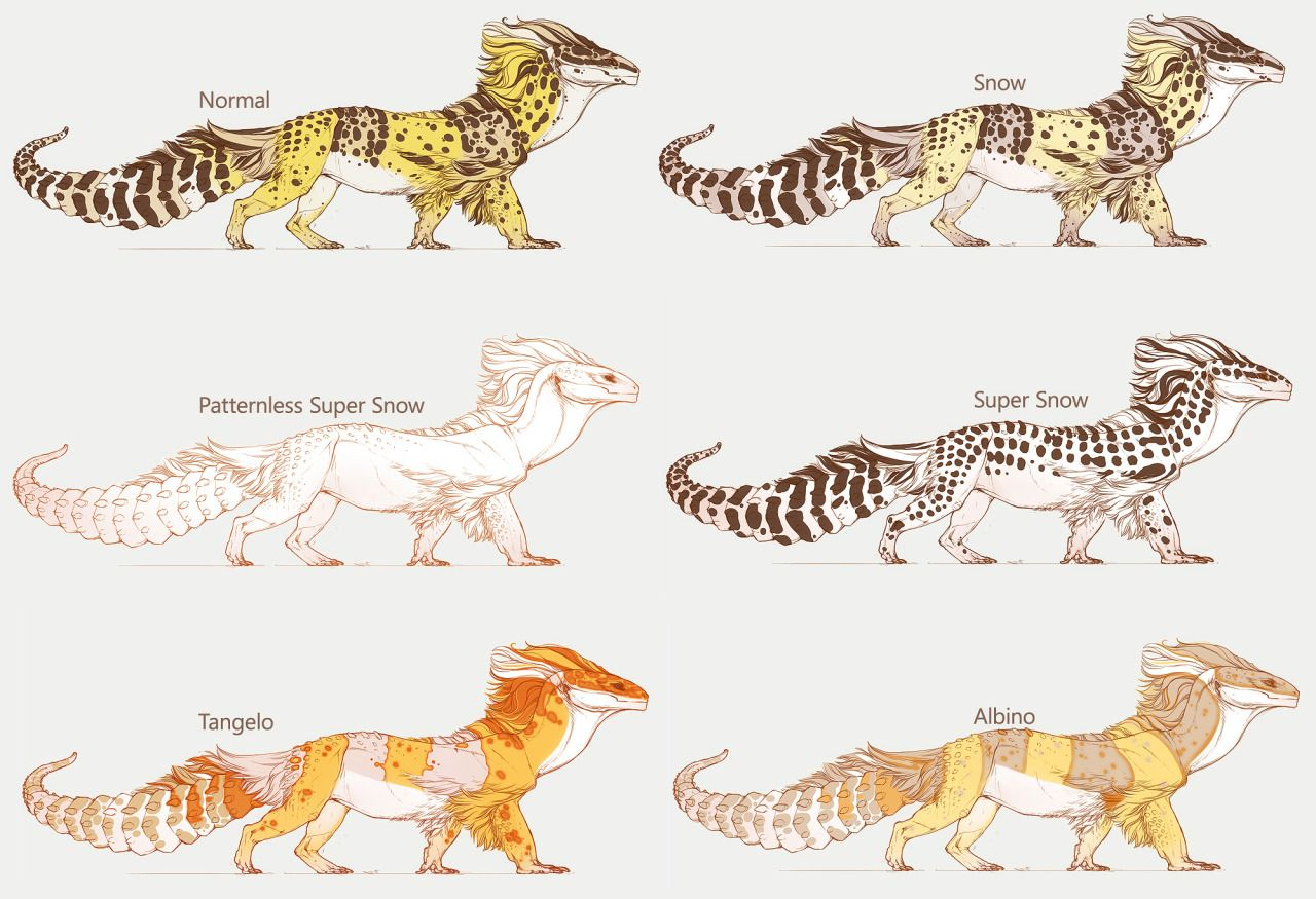 Guide to small pets geckos leopards and reptiles nvjuhfo Images