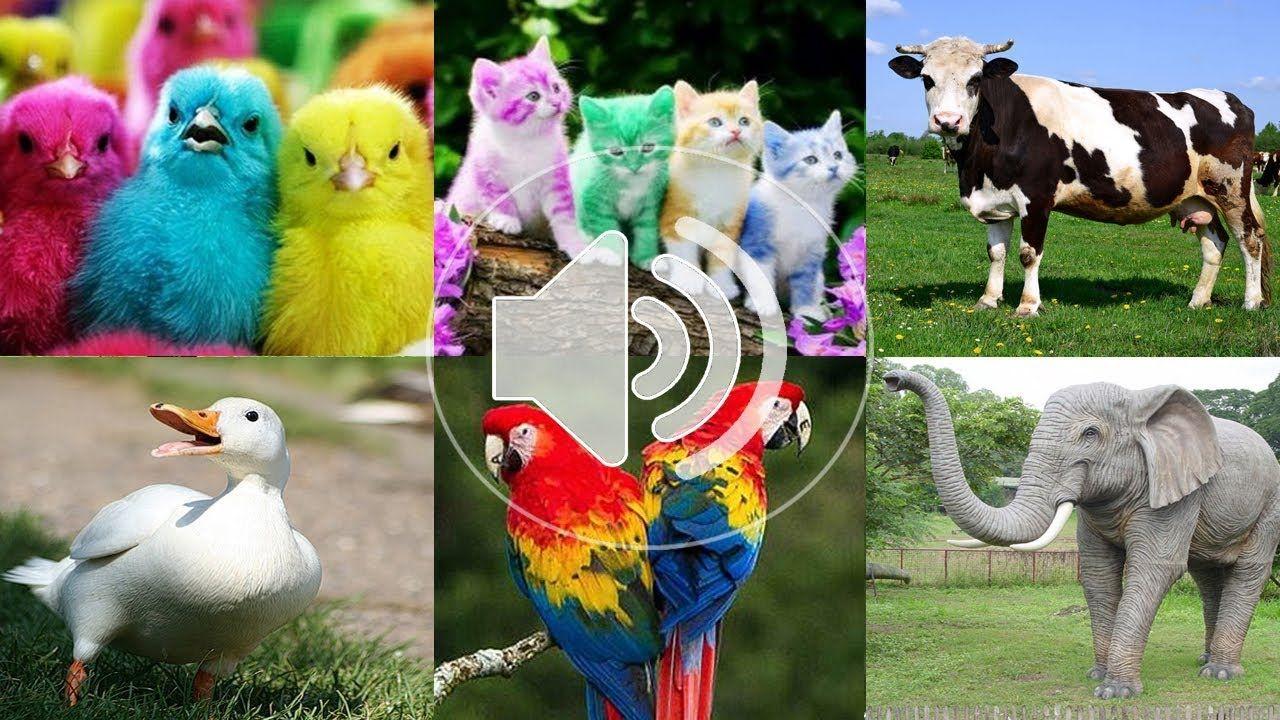 4400 Koleksi Gambar Hewan Edukasi Anak Gratis Terbaik