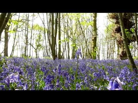 English spring flowers google search spring flowers pinterest english spring flowers google search mightylinksfo