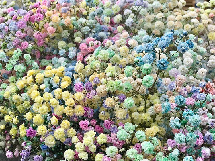 Склад цветов, опт цветов в минске