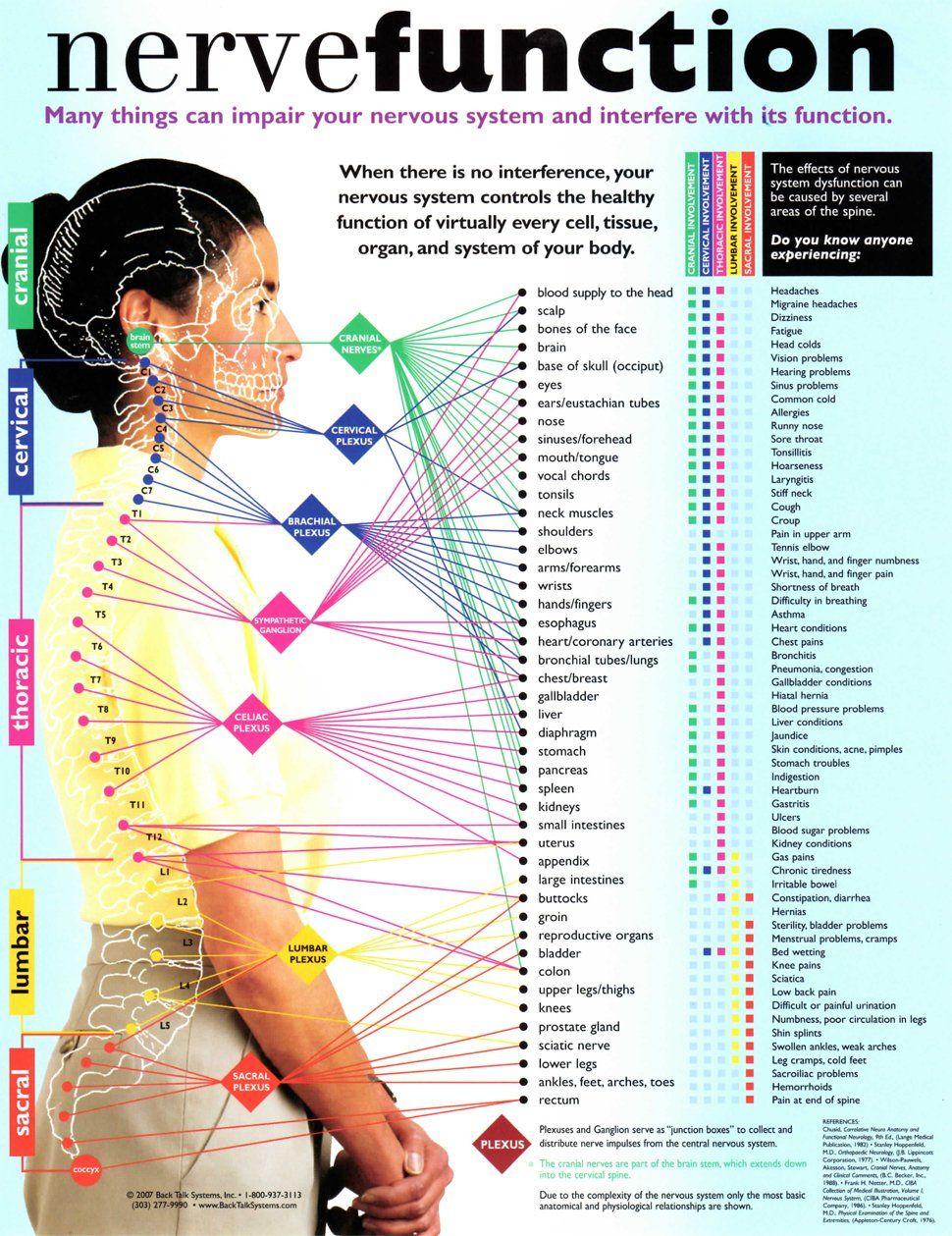 nerve function chart | Bloomington, IL | Bloomington ...