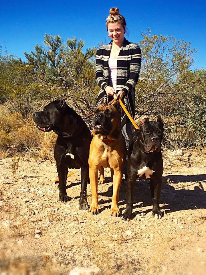 Breeder for over 17 years of Cane Corso in Louisiana with