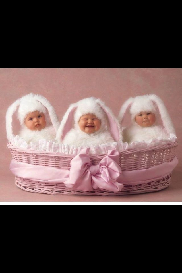 3 bunnies in a basket