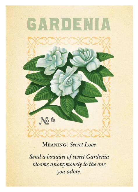 Gardenias Blog Language Of Flowers Flower Meanings Botanical Flowers