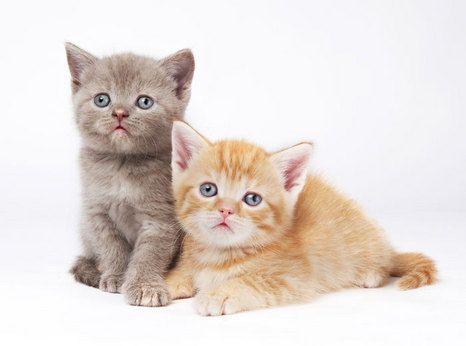 Cute Pets Cute Animals Cute Funny Animals Orange Cats