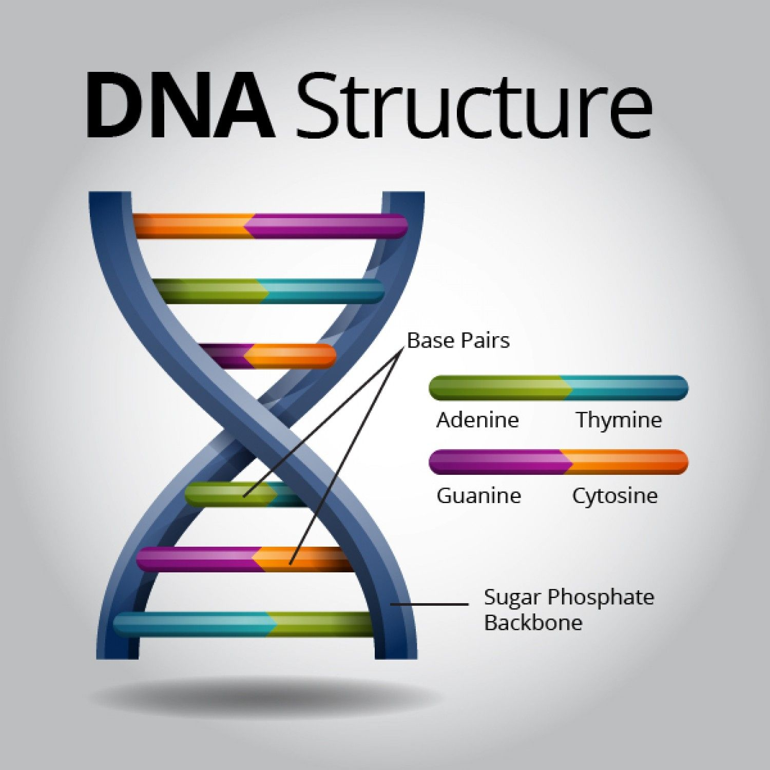 DNA is the universal genetic code that stores complex ...