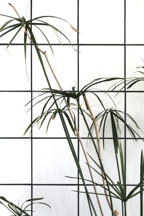 minimal palms #interiordesign #home #plants