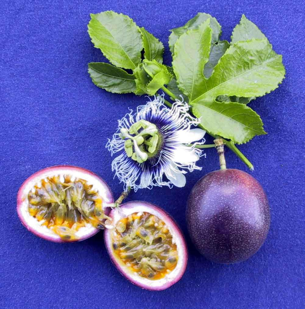 Parchas passion fruit fruits from around the world