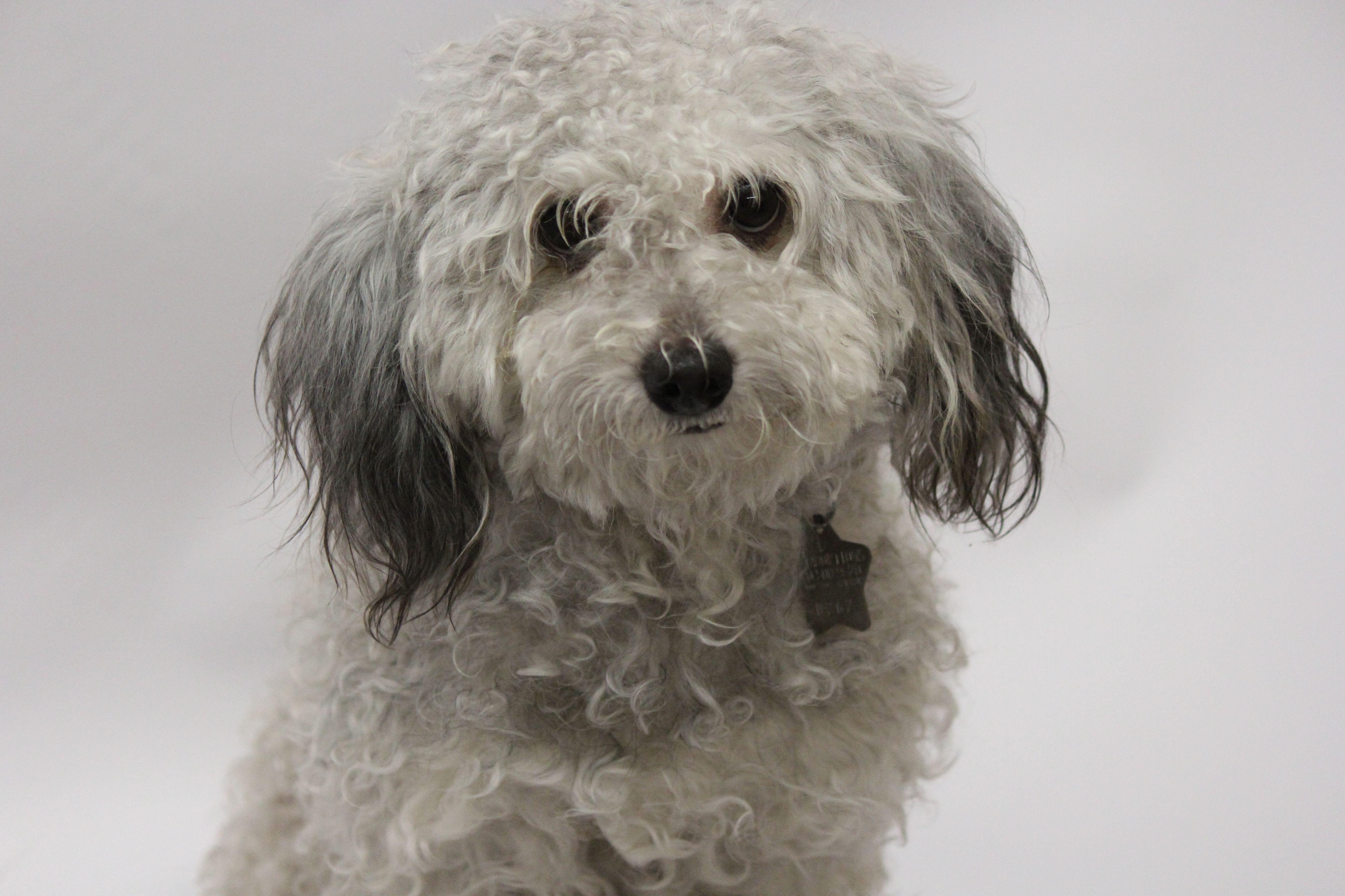 Puppies for adoption az