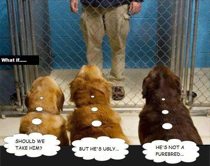 Pet adoption in  reverse