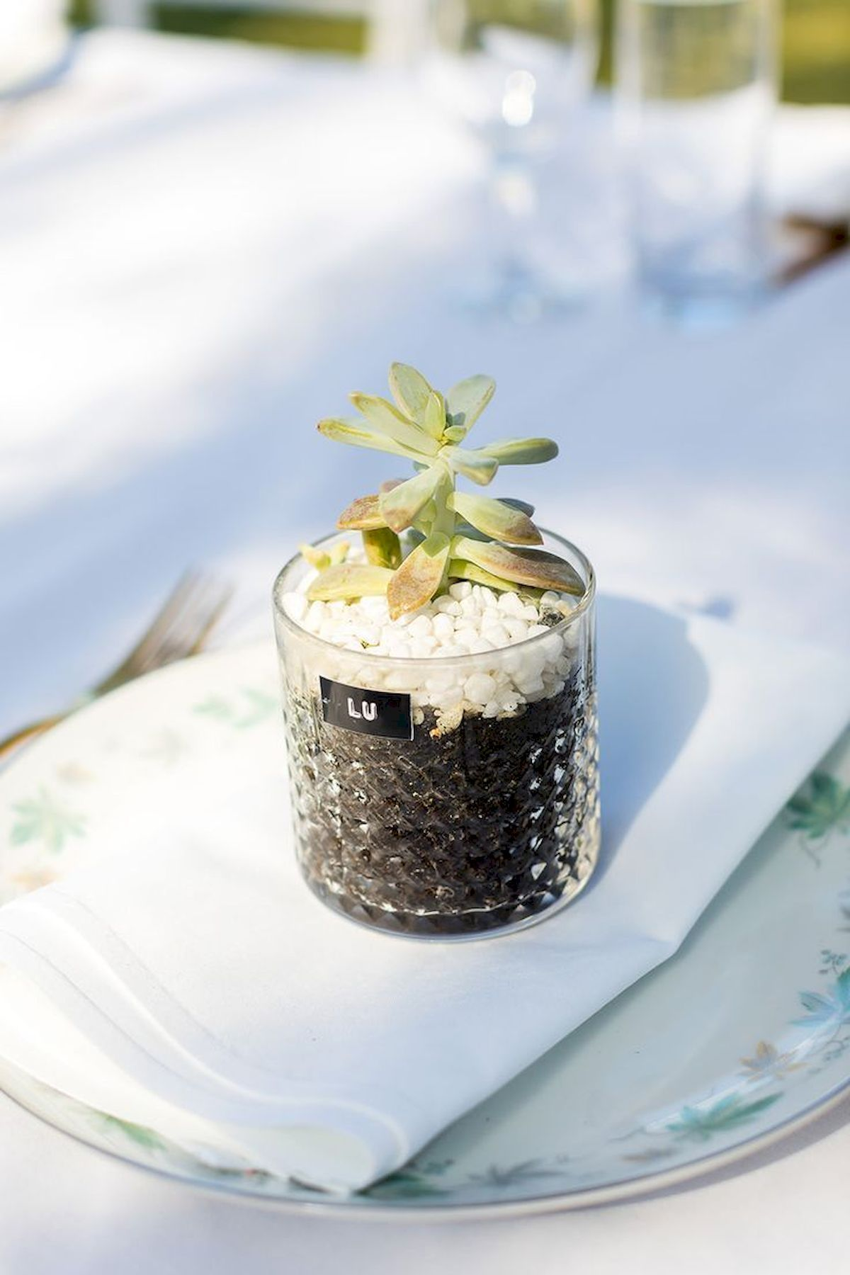 Nice Succulent Gift for Wedding