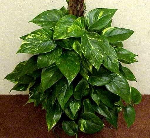 image detail for -flower basket gardening articles house plants