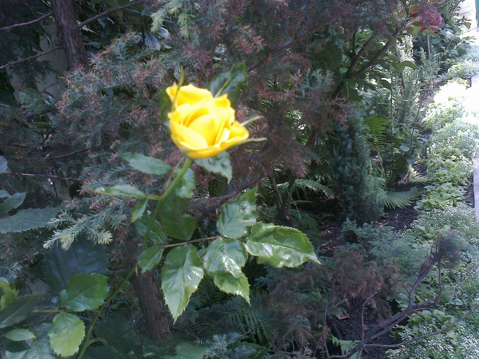 Пин от пользователя Светлана Тузова на доске Цветы Розы