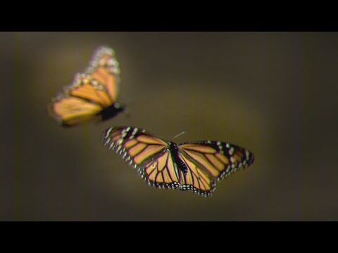 How to Create Your Own Monarch Butterfly Rest Stop