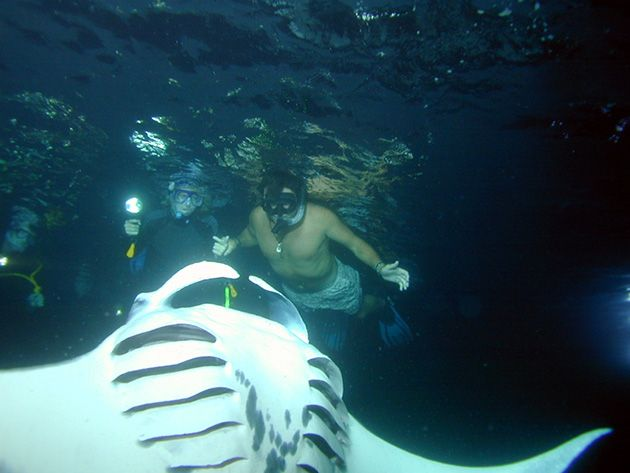 Google Image Result For Http Coralreefsnorkeladventures Com Wp
