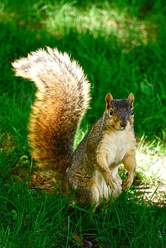 The Squirrel Stare Lock... LOL    | Flickr - Photo Sharing!