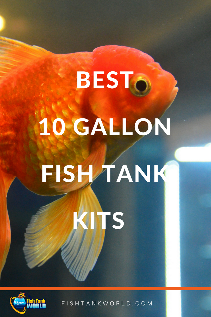 Best 10 Gallon Fish Tank Kit For Beginners Fish Tank World 10 Gallon Fish Tank Cool Fish Tanks Diy Fish Tank