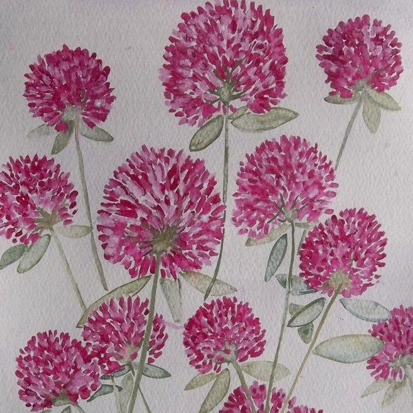 Red Clover - Original painting £10.00