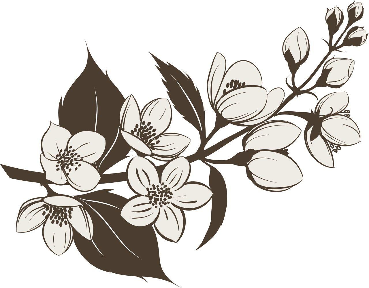 Jasmine tattoo pinterest jasmine jasmine flower tattoos and jasmine izmirmasajfo