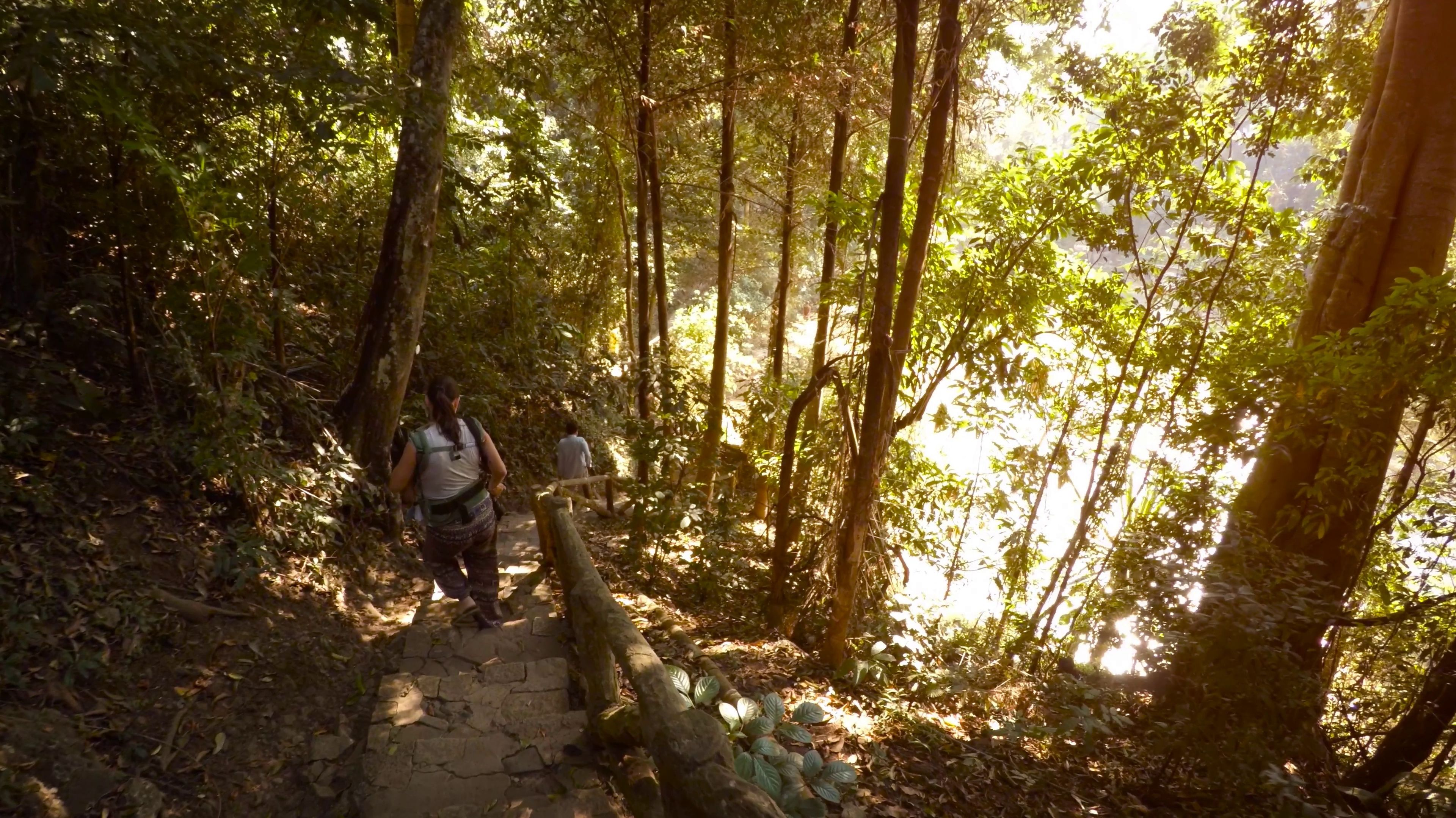 Hiking Spots In Sunny Singapore Tallypress Nature Trail Singapore Travel Nature Reserve