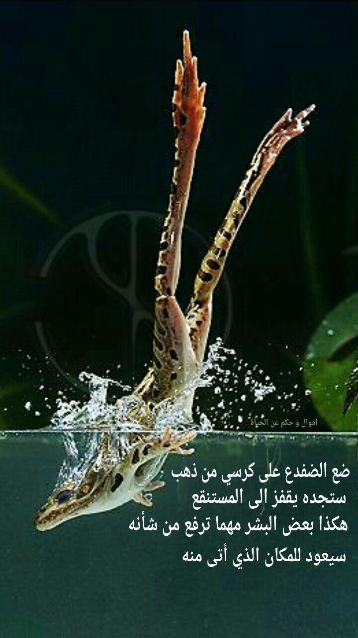 اقوال و حكم عن الحياة Arabic Words Words Quotes