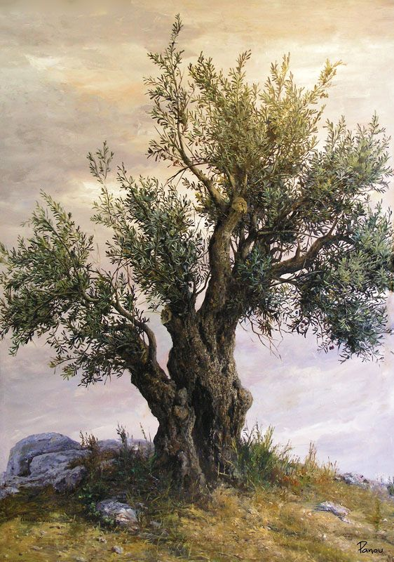 Olive Tree At Hill Bizart Galleries Arbre Olivier Peinture