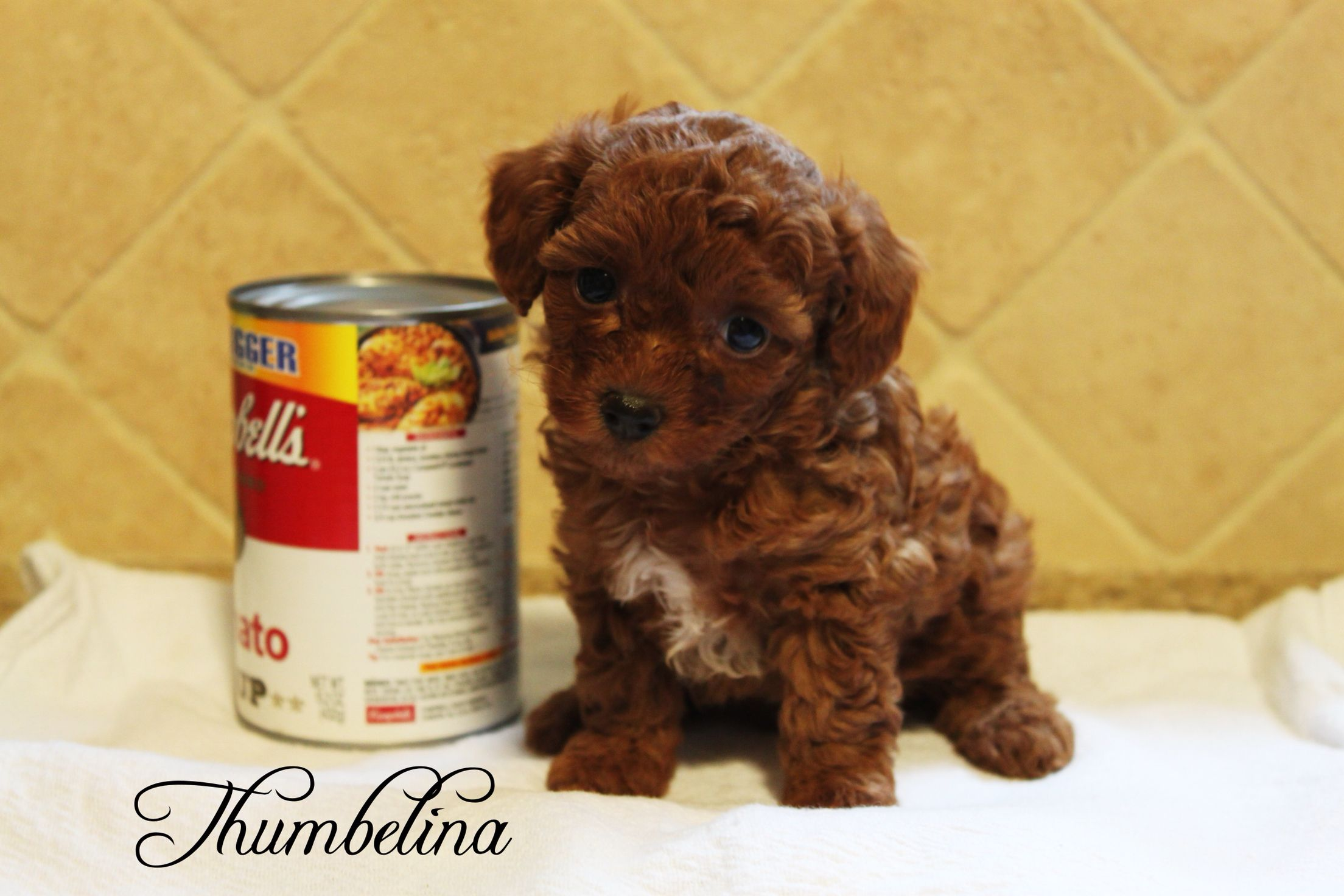 One Of Teeny Tiny Babies Thumbelina Food Animals Dog Food