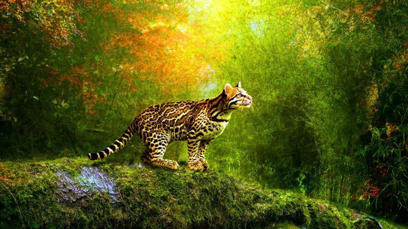 HD Beautiful Cheetah Wallpapar[1366768]