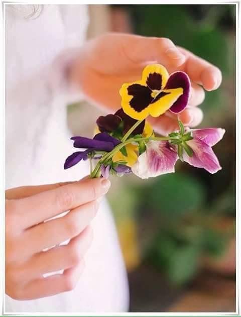 Pin By Rawnaq Akram On Hijab Girls Pansies Flowers Pansies Happy Flowers
