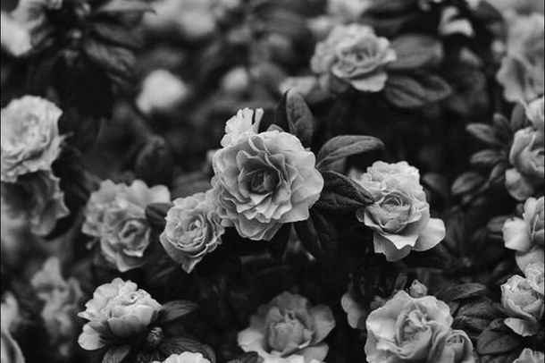 alternative, black and white, dark, floral, flowers, grunge