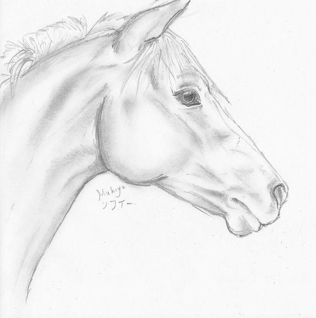 Horse head sketch by mukiya traditional
