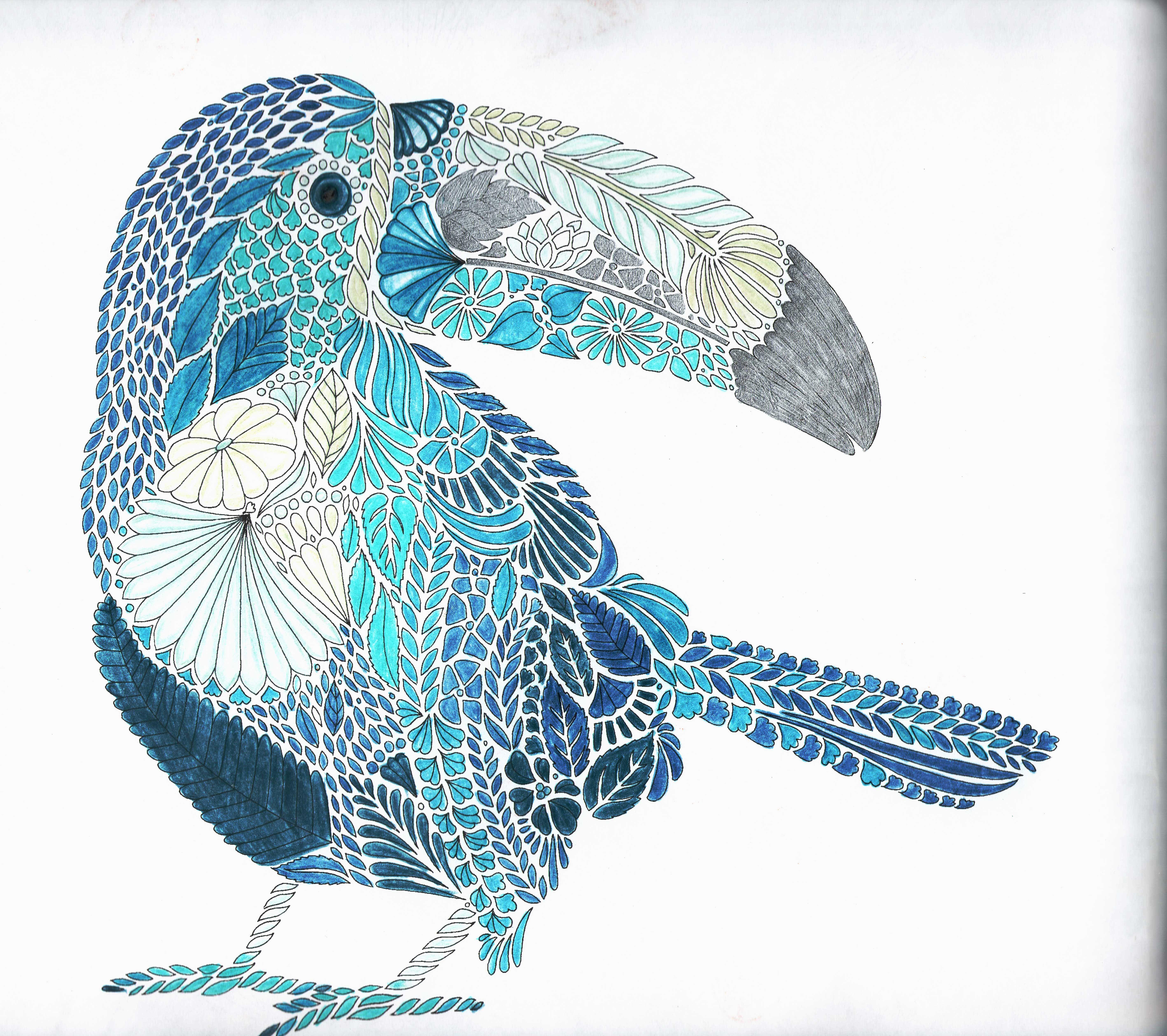 Millie Marotta Tropical World Tucan Adult ColoringColoring BooksColouringBird