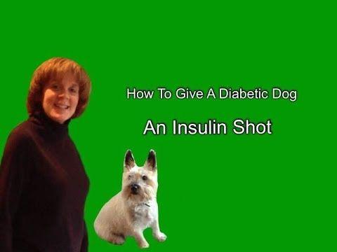 How To Give A Diabetic Dog An Insulin Shot Diabetic Dog Dog Shots Dog Training Techniques