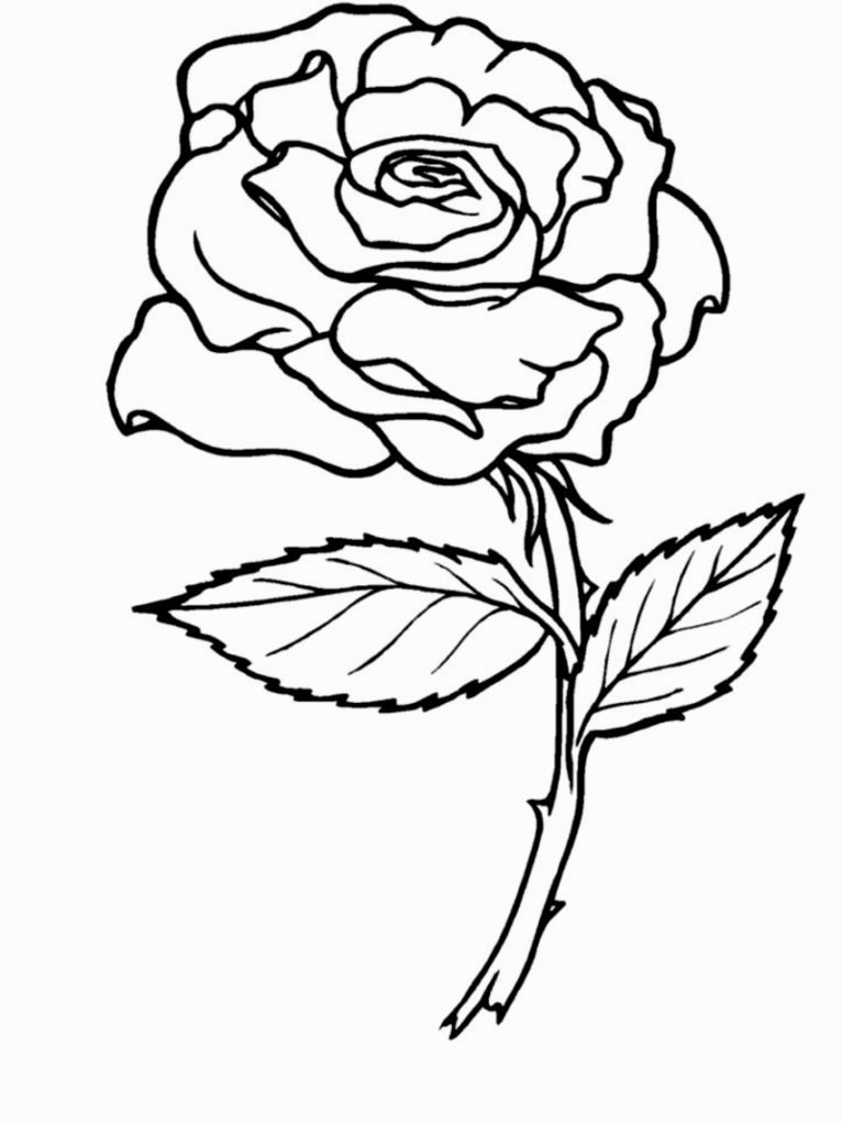 rose coloring picture