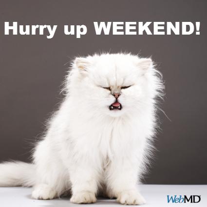 Cats Cat sneezing, Cat diseases, Cats