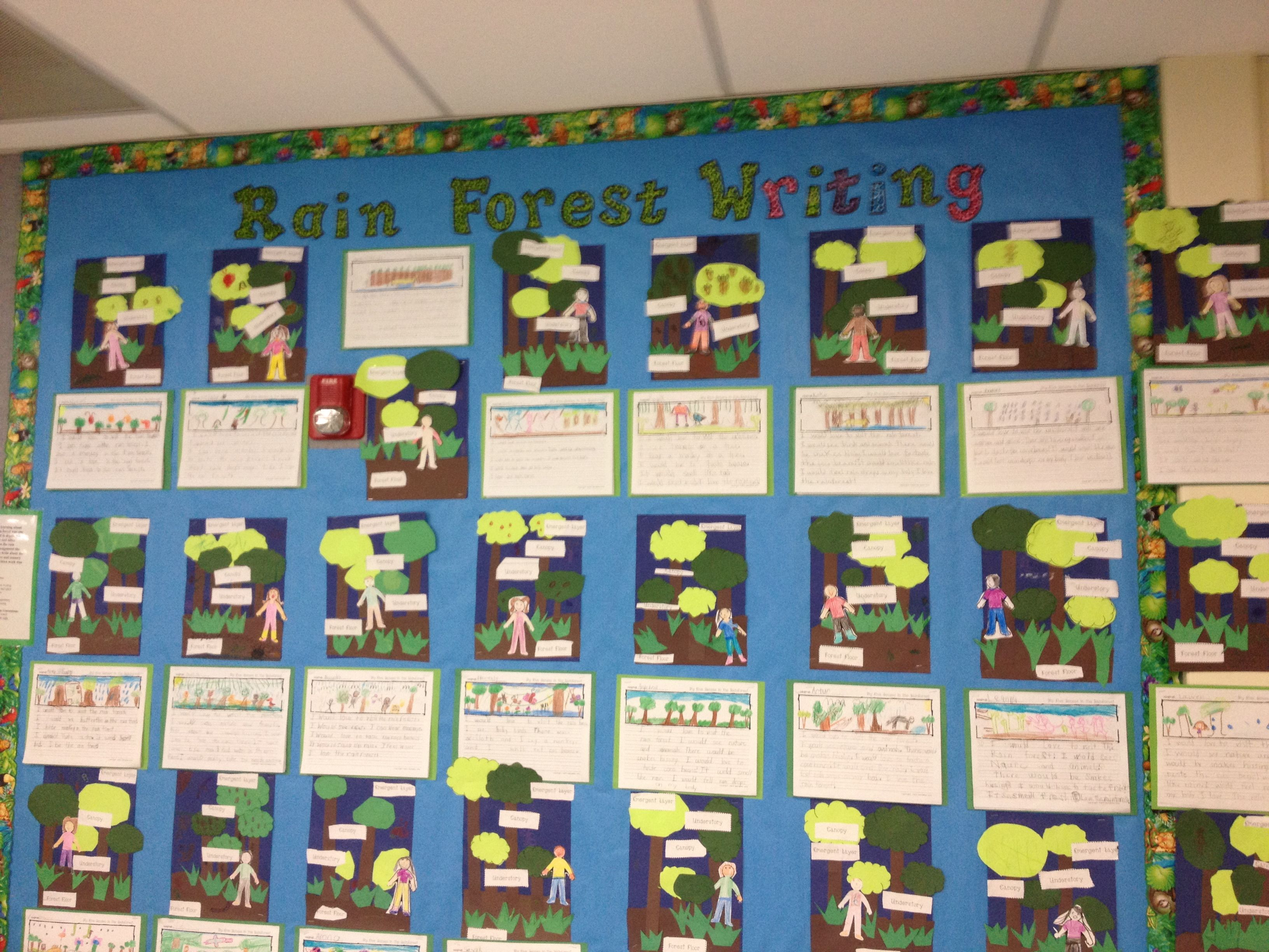 Open House Layers Of The Rainforest Art And 5 Senses Writing