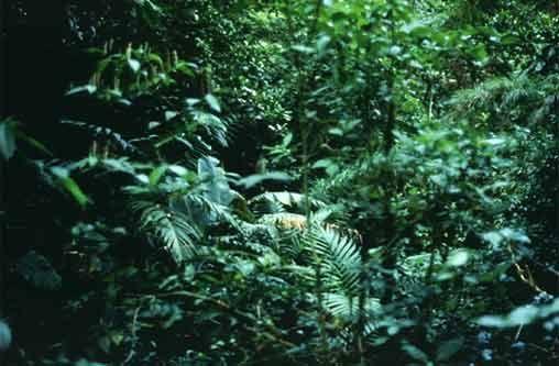 Virtual Rainforest Visits | Rainforest Alliance