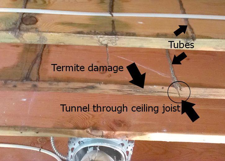 Subterranean Termite Tubes I Termite Control Termites Termite Pest Control